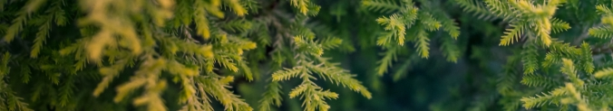 autumn-leaves-blade-of-grass-blur-668282